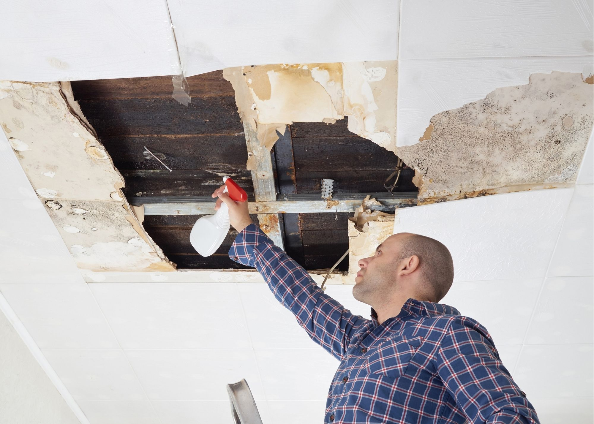 mold removal Baton Rouge